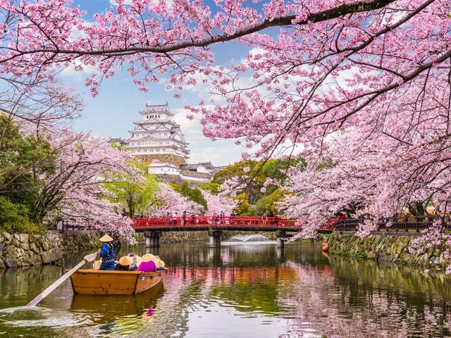 Lua de Mel no Japão: amor na Terra do Sol Nascente e das cerejeiras em flor