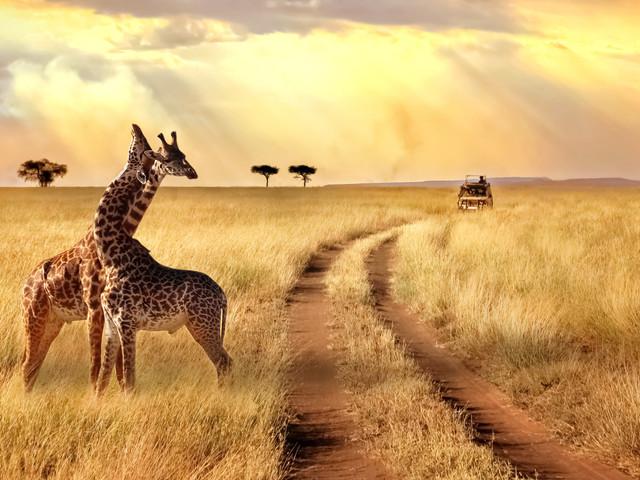 Lua de mel na Tanzânia (parte II): safáris e praias paradisíacas além de Zanzibar