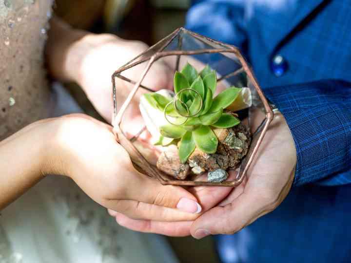 Plantas para a casa nova: como e quais escolher