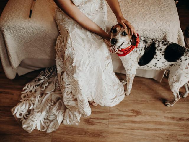 Querem incluir o pet no álbum de casamento? Não percam essas dicas