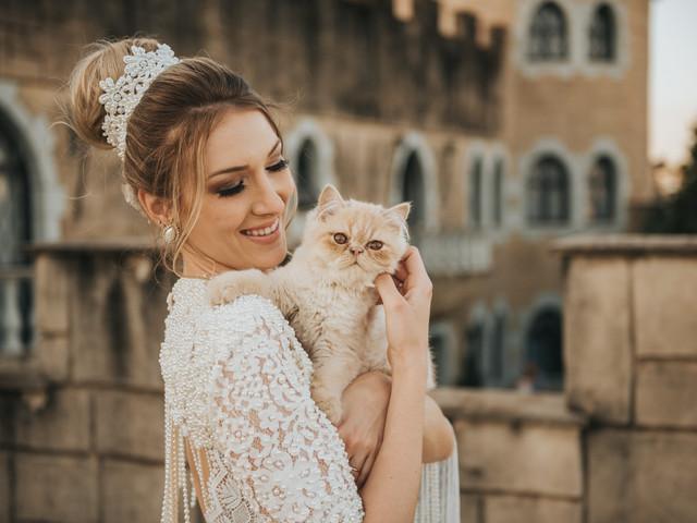 Como incluir os gatos no dia C? O seu animalzinho pode estar presente