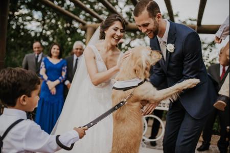 Maneiras originais para o seu pet participar do casamento