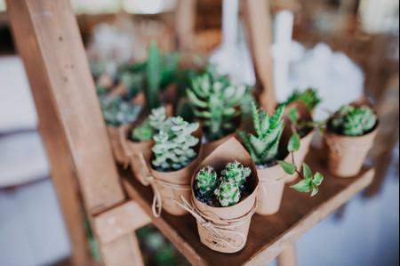 7 Plantas ideais para oferecer como lembrancinha