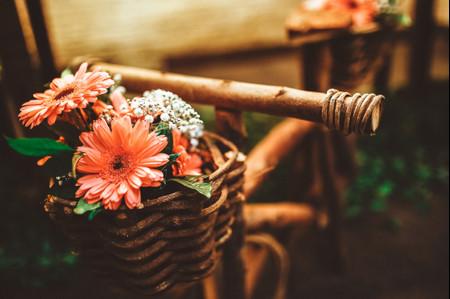 Gérbera: a flor simples que vocês precisam ter em seu casamento