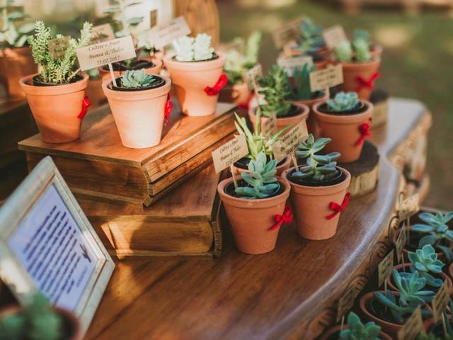 6 Plantas ideais para oferecer como lembrancinha