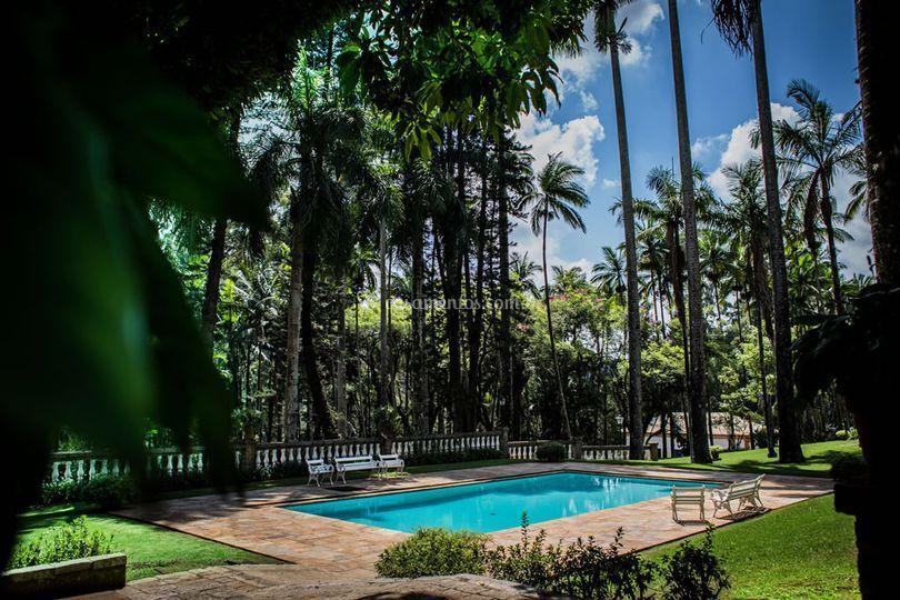 Piscina rodeada de palmeiras