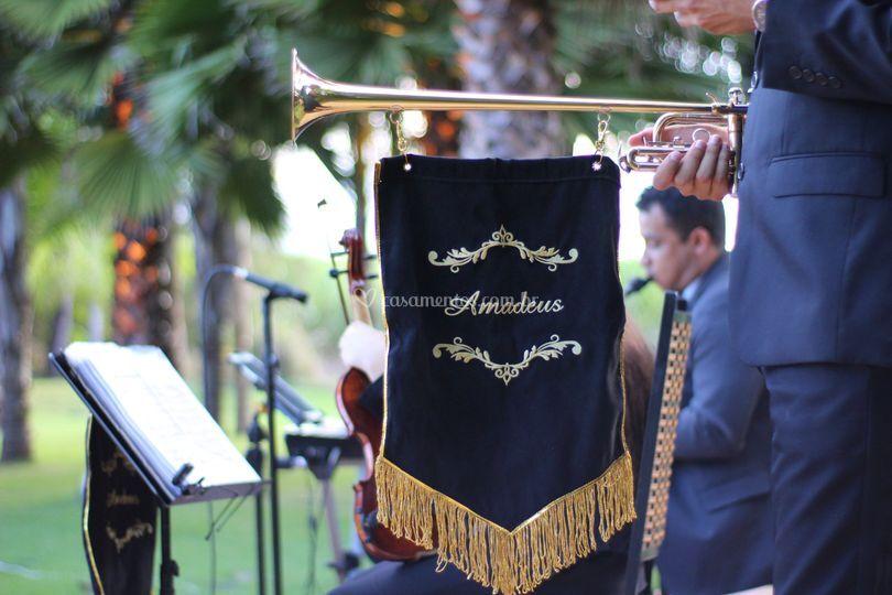 Amadeus - músicos para eventos