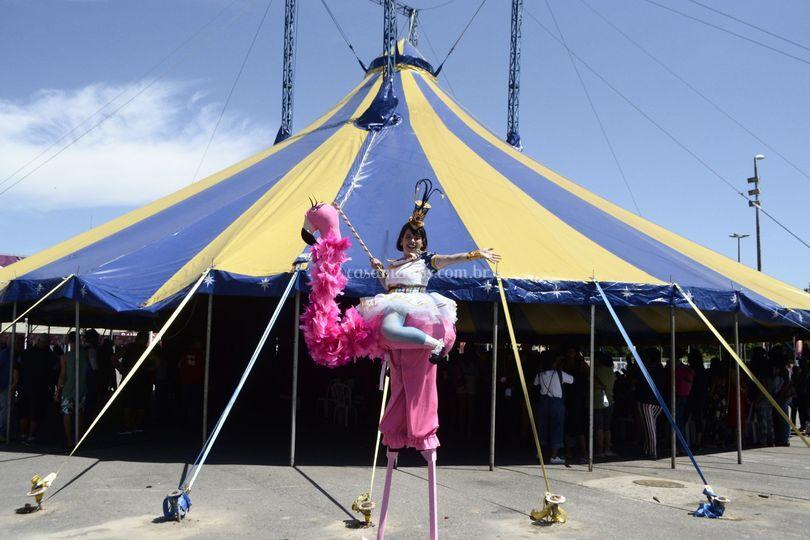 Perna de pau - Flamingo