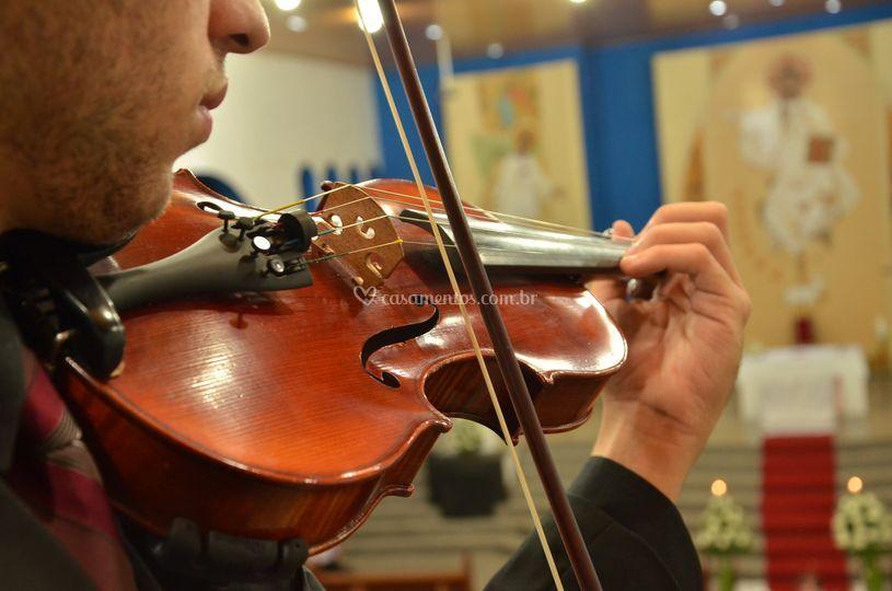 Cortejos de violinos