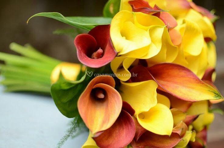 Callas laranja e amarela