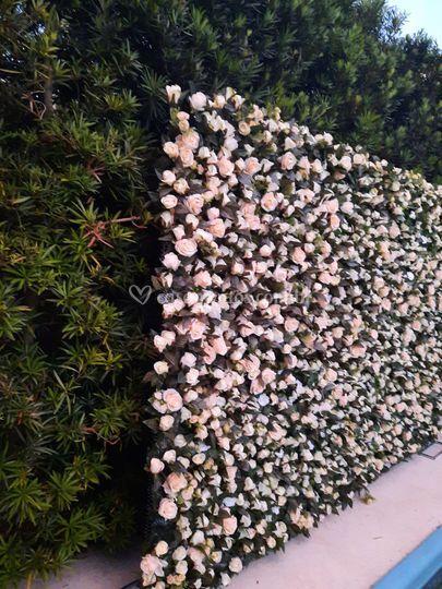 Rosas Brancas e Creme