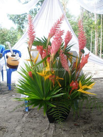 Arranjos de flores tropicais
