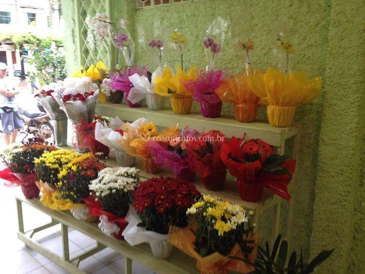 Várias flores