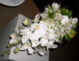 Orquídeas com astromérias