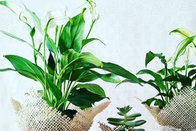 Gisa Moura Studio de Jardinagem