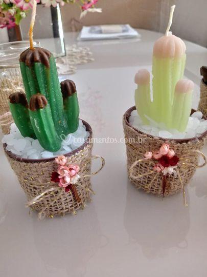 Cactus em vasinhos pequenos.