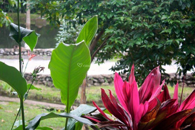 Nossas Flores e Lirios