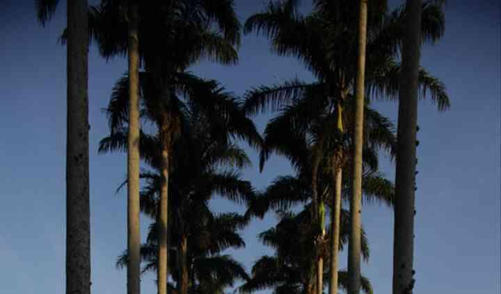 Aleia de palmeiras entrada