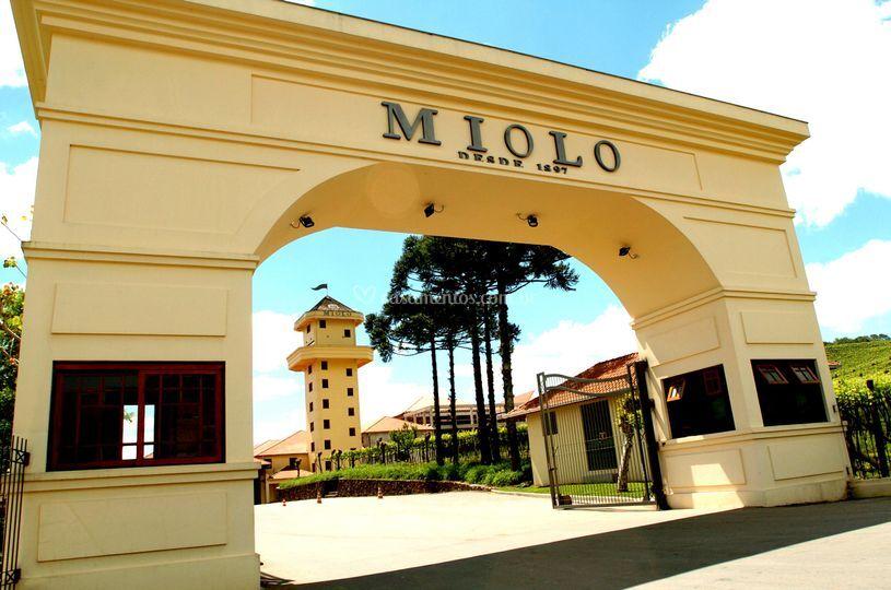 Vinícola Miolo - RS