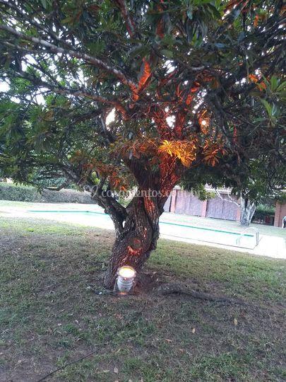 Iluminação Arvores