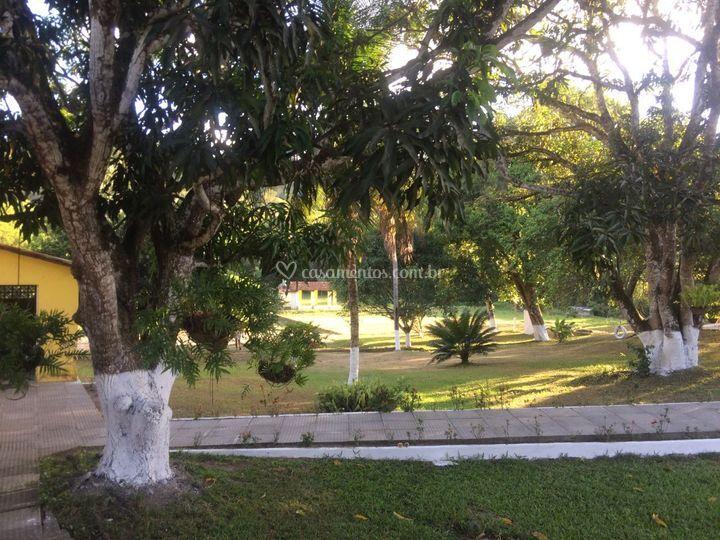 área  livre verde
