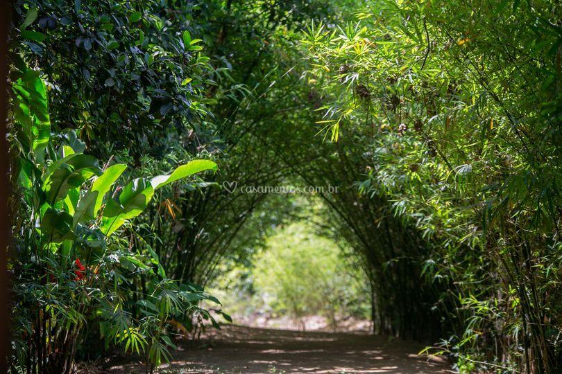 Túnel de bambus
