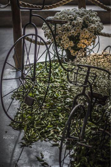 Cenário, as bicicletas