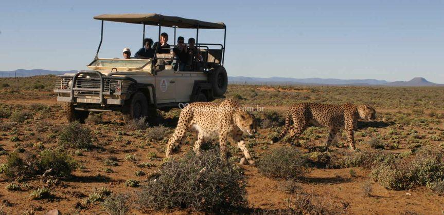 Safari - Kruger Park