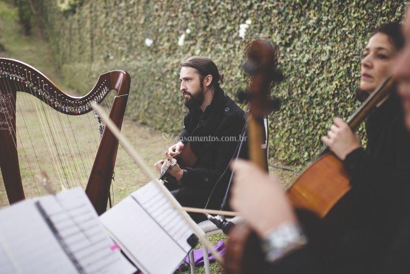 Cordas e harpa