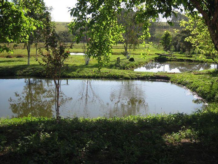 Lago/ Natureza