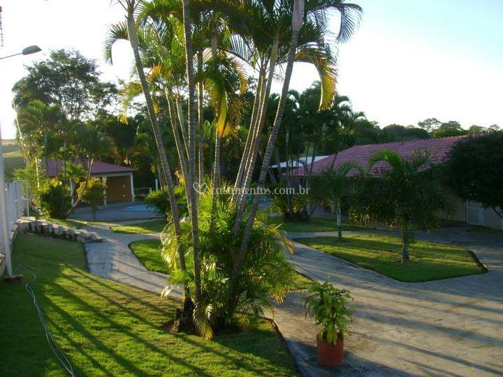Árvores e palmeiras