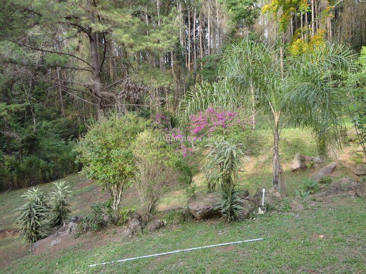 Mata nativa com muitas plantas