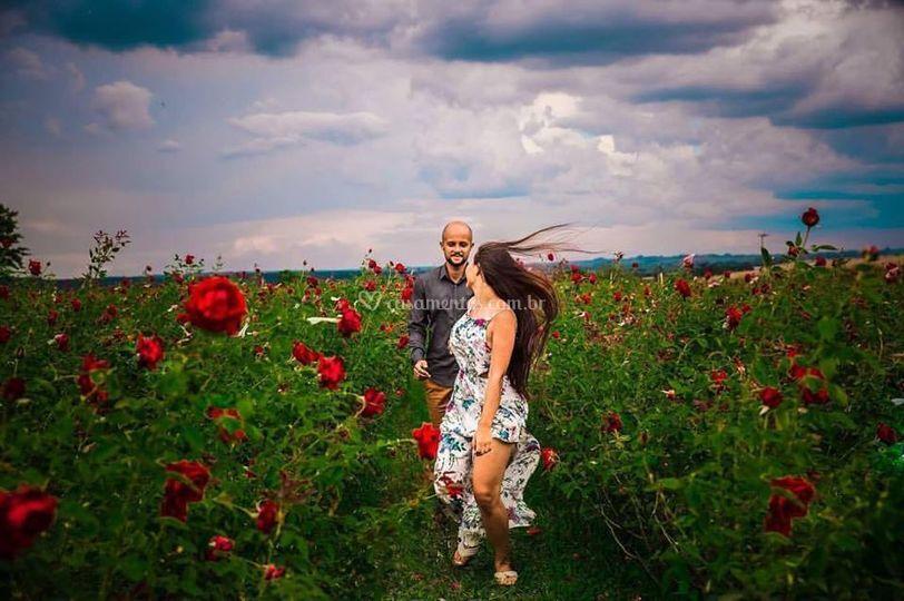 Fotos em plantação de rosas