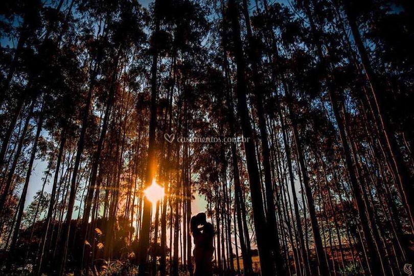 Pôr do sol em eucaliptos