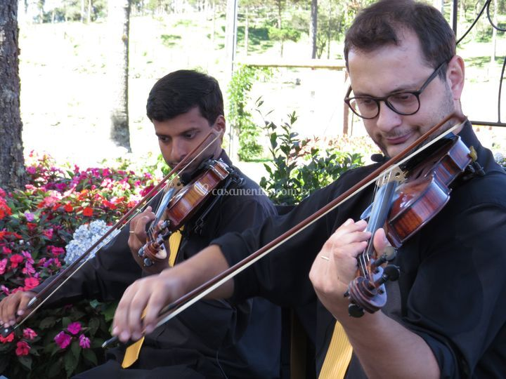 Audium - violinos