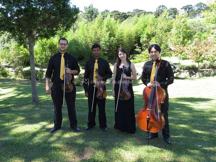 Audium - quarteto