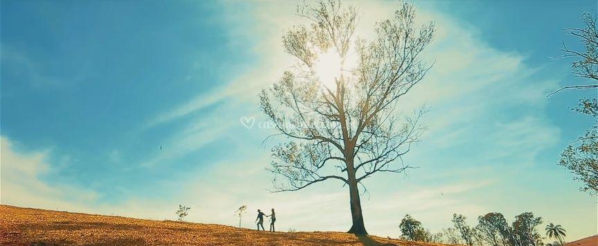 Árvore da Vida Produções