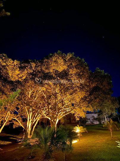 Árvores lindas iluminadas