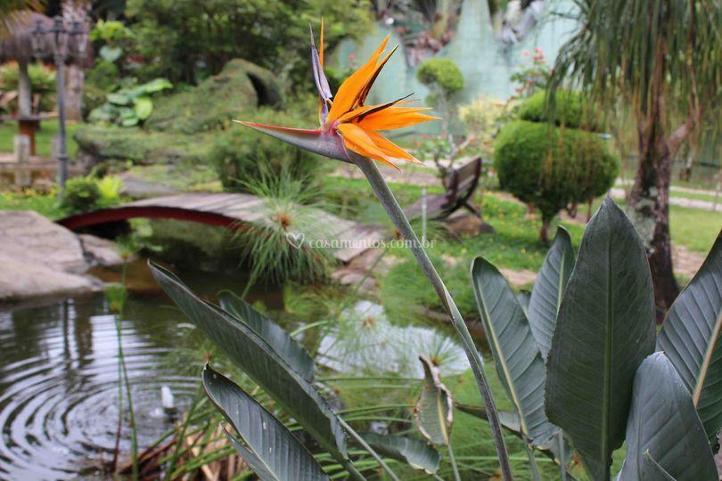Flor Ave do Paraíso.