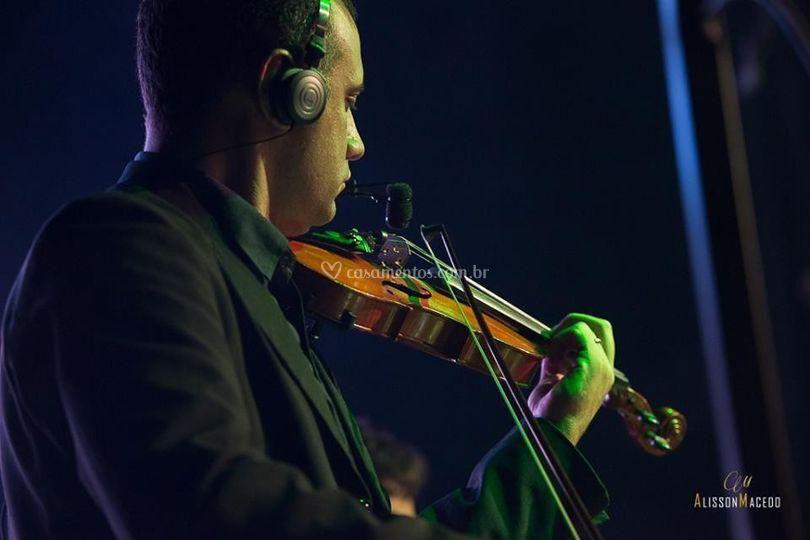 Violino - recepção
