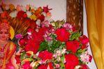 Flores vermelhas de Oficina das Flores