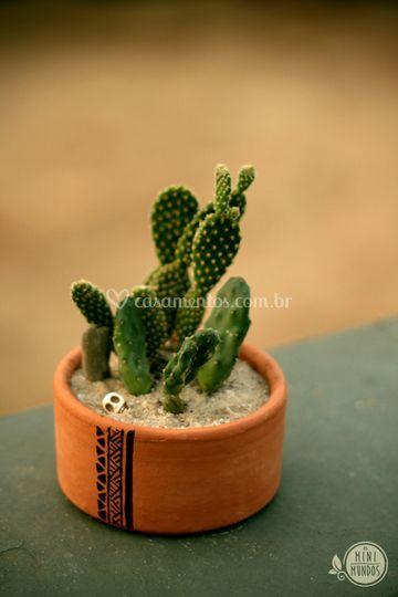 Mini jardim Deserto