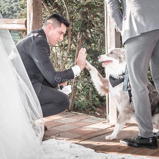 Dog Romeu com seu parceiro