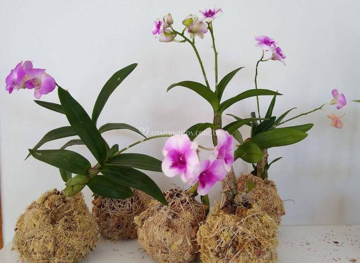 Kokedamas com orquídeas