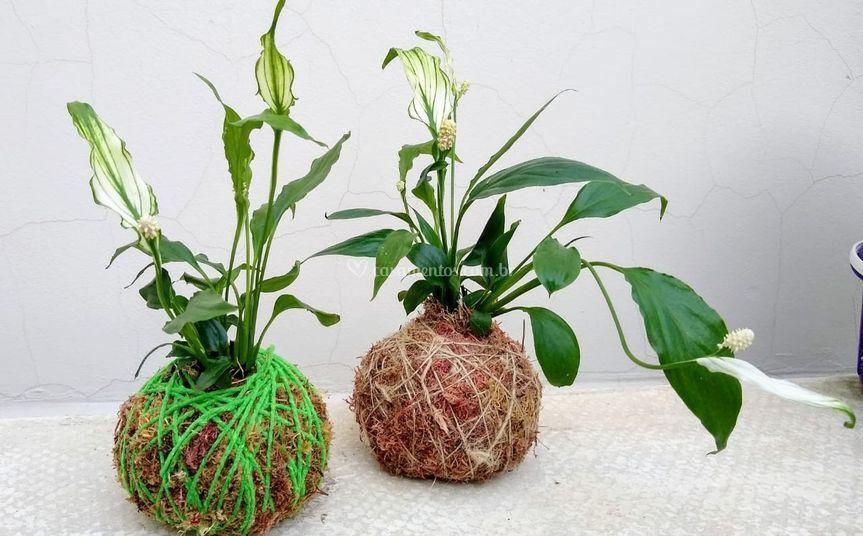 Kokedamas para decoração