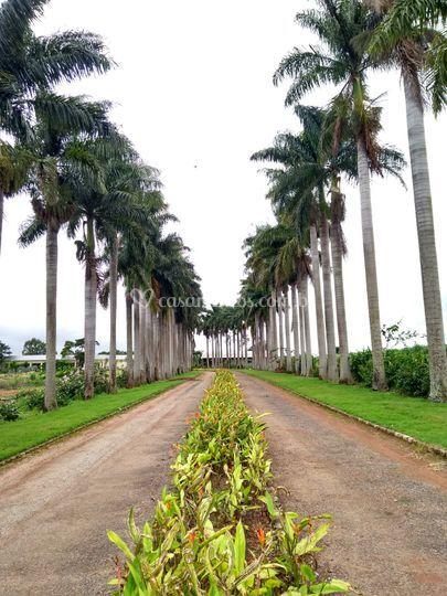 Hall das palmeiras