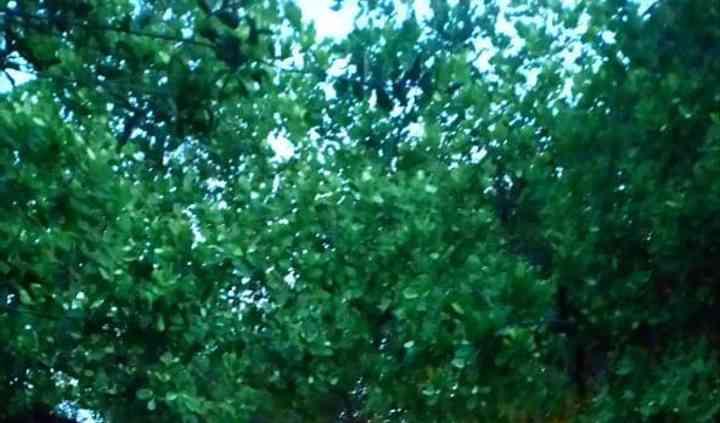Espaço arborizado