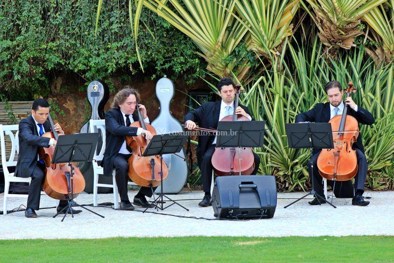 Violoncelos rg music