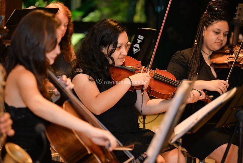 Quarteto de Violinos