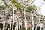 Caminho de noiva com árvores